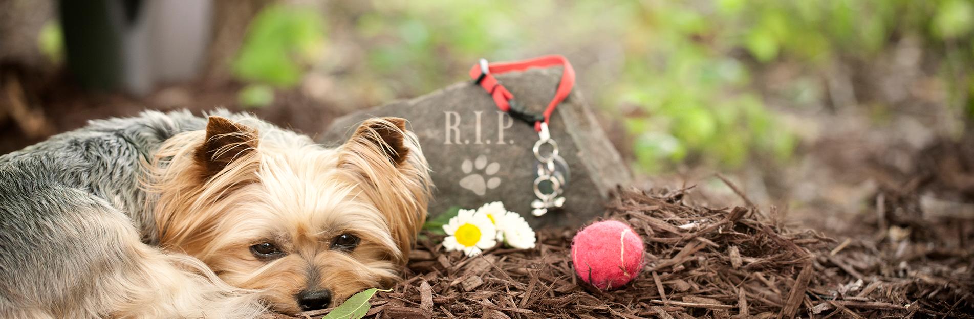 Online Memorials | Peaceful Pastures Pet Cemetery